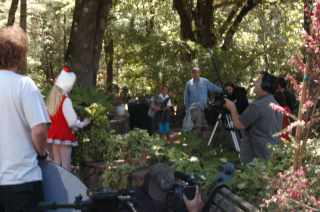 The North Pole Garden. Among the trees on Mt. St. Helena.
